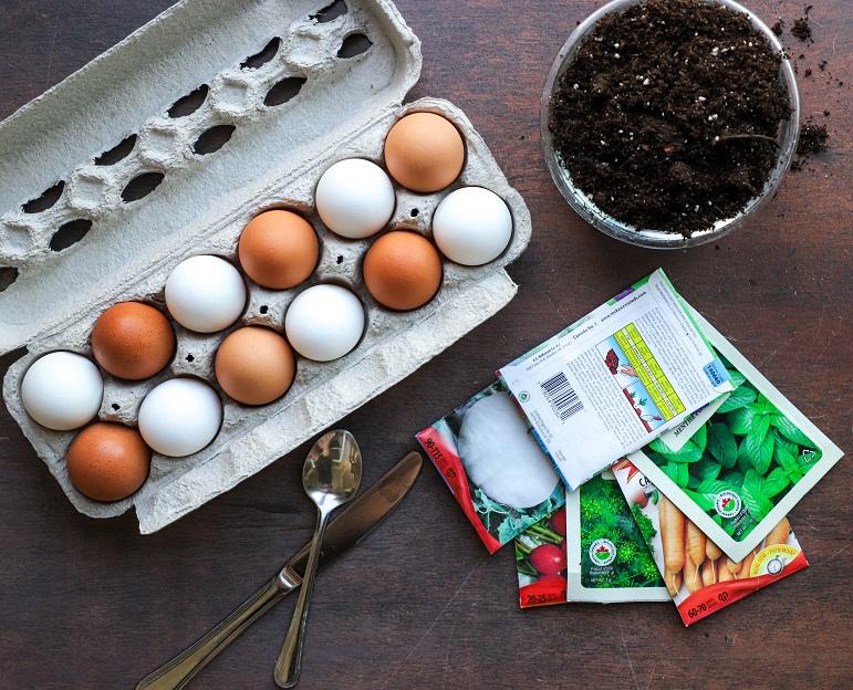 Egg shell seedlings