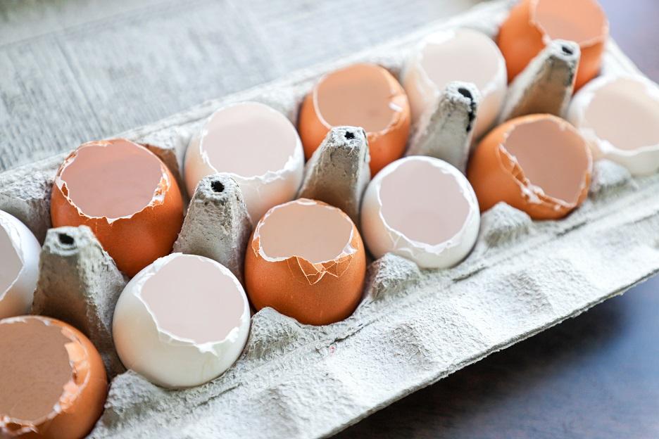egg shells planters