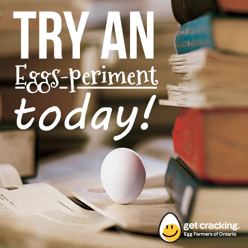 eggsperiment eggs science
