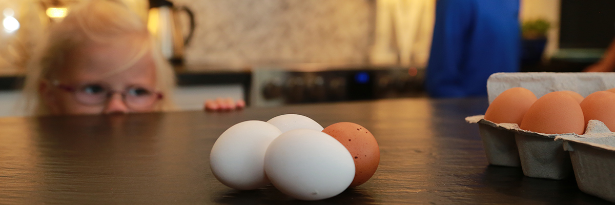 Child look at eggs on a counter